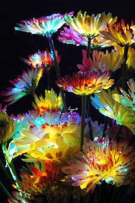 Glittering Dandelions Pictures, Photos, and Images for