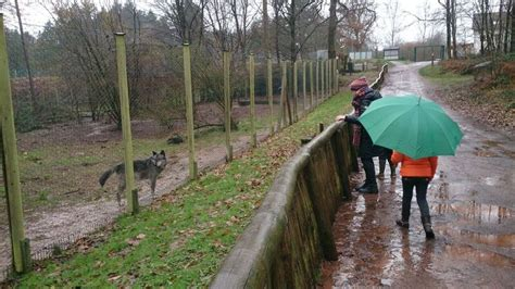 Merzig Wolf Park - Travel, Events & Culture Tips for