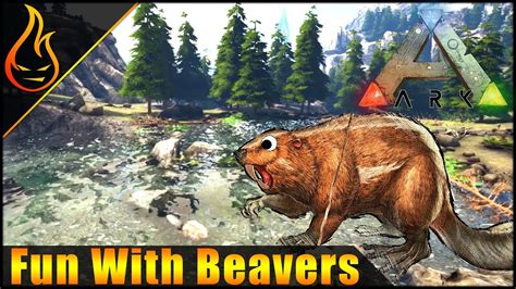 Alpha Carno Killing and Beaver Action ARK Survival Evolved