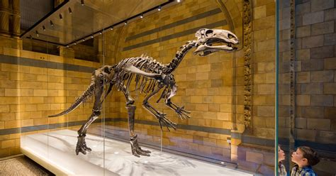 London Natural History Museum Dinosaur Discovery Family