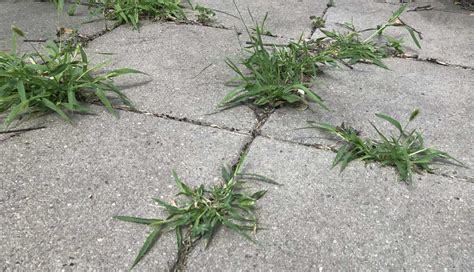 How to Get Rid of Weeds on a Patio and Keep Them From